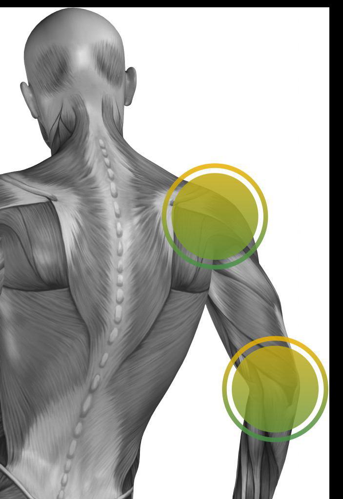Muskulatur Mensch Kopf bis unterer Rücken. Muskulatur der Rückseite